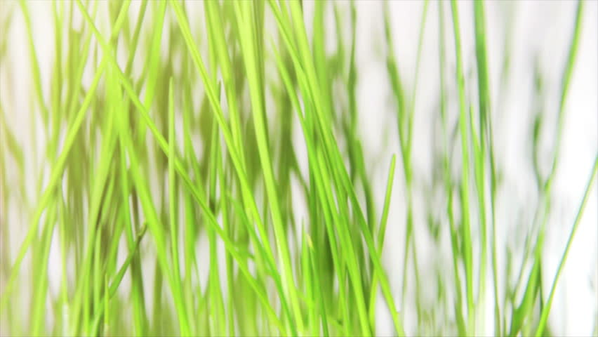 soft wheat background moving through grass background 30fps trucking from right to