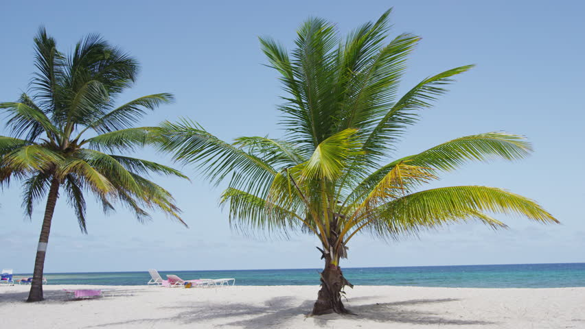Beach with palm trees on against clear blue sky. Idyllic view of nature travel vacation holiday tourist destination beach on Barbados, Caribbean. RED EPIC SLOW MOTION.