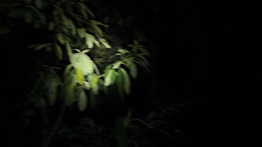 Person With Flashlight Searching In The Dark Stock Footage