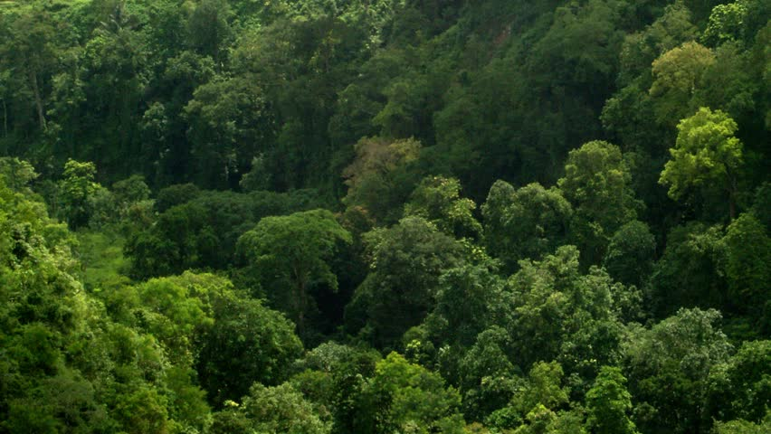 Timelapse of shadows over tree tops. | Shutterstock HD Video #2204980