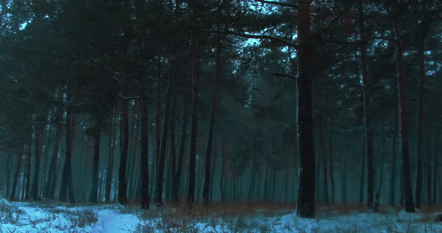 Static picture snowstorm in winter pine forest. salient trunks of trees in haze | Shutterstock HD Video #22132237