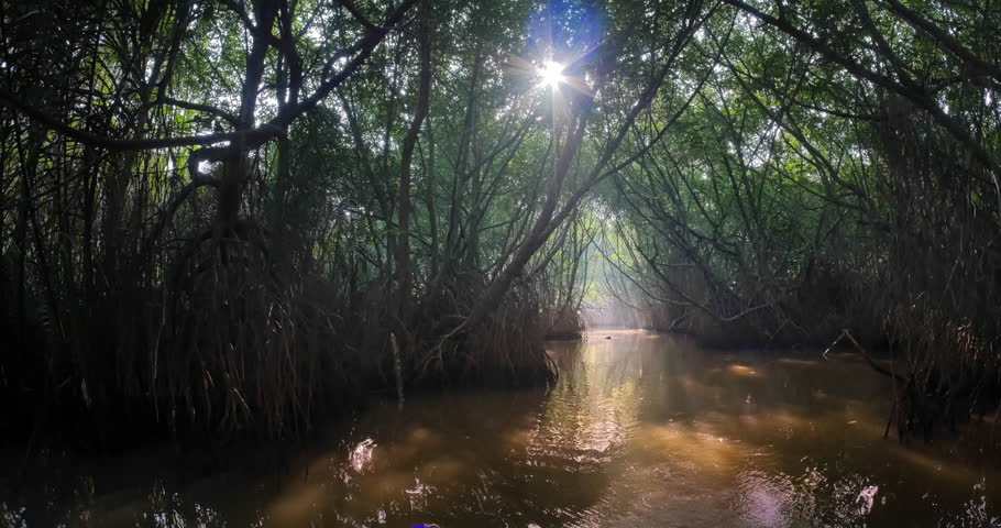 Rays of sun light through tropical mangrove forest canopy in scenic nature environment