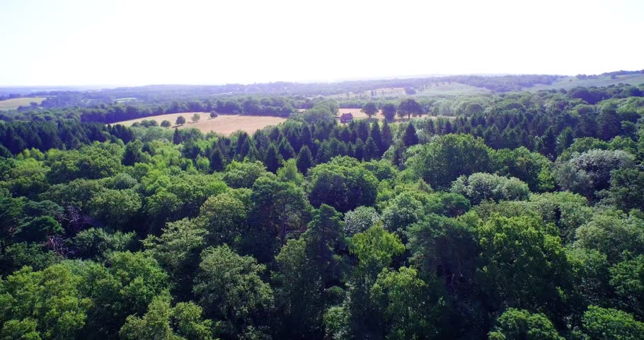 4K Drone footage of an English forest.