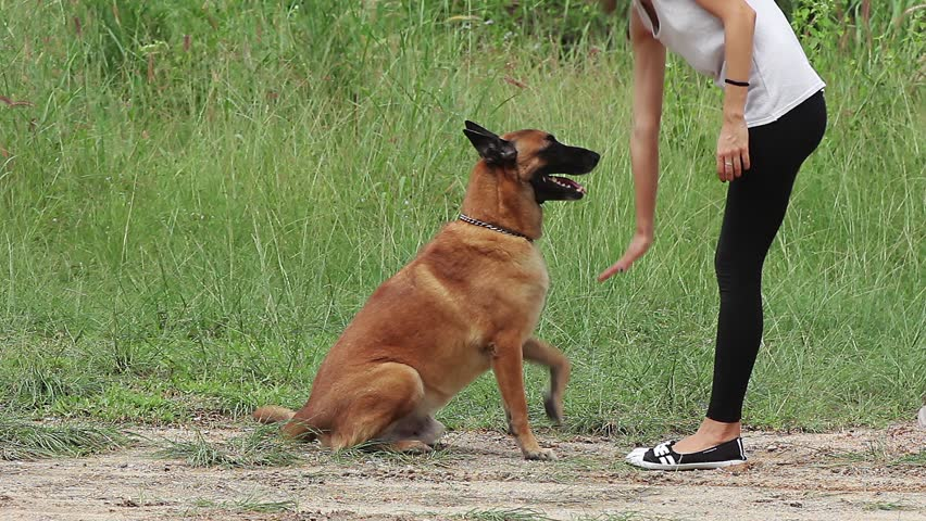 Girl and pet, dog trainer feeding and doing exercise with German Shepherd | Shutterstock HD Video #22460083