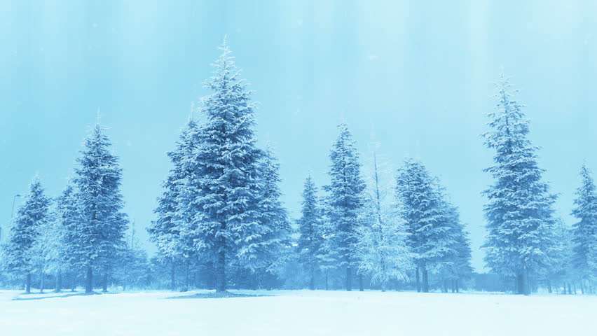 Holiday tree | Shutterstock HD Video #22463878