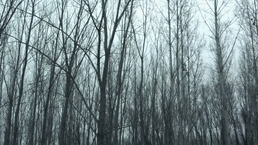 Driving pov side view bare treetop forest in winter afternoon, slow motion point of view of vehicle riding through woodland | Shutterstock HD Video #22548637