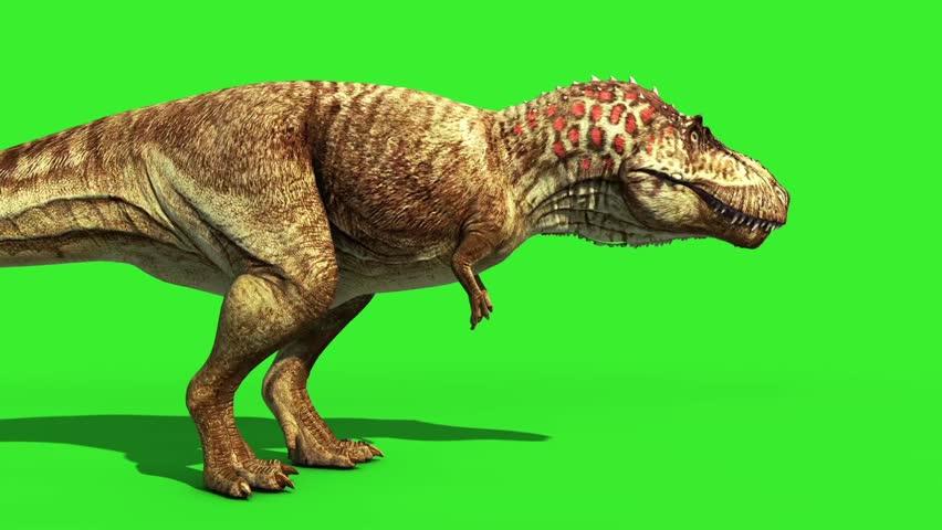 T Rex Tyrannosaur Feathered Roar Close up Loop Jurassic World Dinosaurs Green Screen