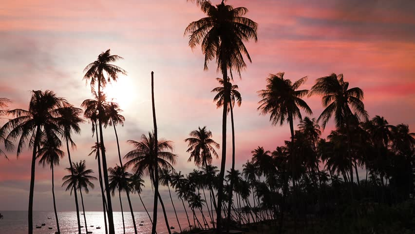 Dark silhouettes of coconut palm trees and amazing cloudy sky on sunset at tropical place Mui Ne, Vietnam  | Shutterstock HD Video #22609177