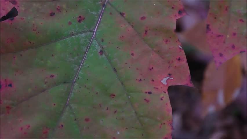 Header of oak