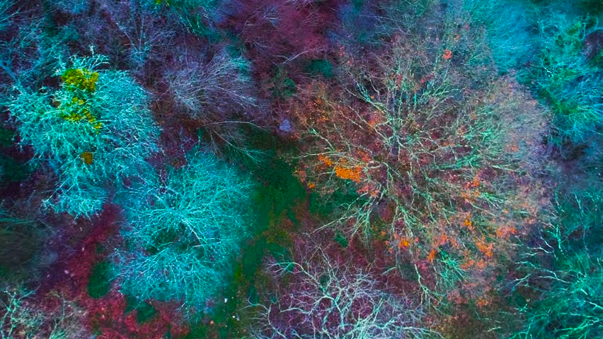 Aerial colorful forest drone view 60 fps | Shutterstock HD Video #22787947