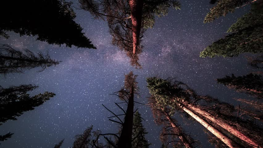 An overnight time lapse of a hammock view looking up as the milky way and stars pass across the trees in the night sky.
