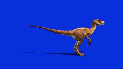 Dinosaurs Velociraptor Looks Around Side Jurassic World Prehistory Blue Screen