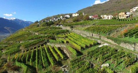 Aerial view over vineyards in Valtellina - Sondrio