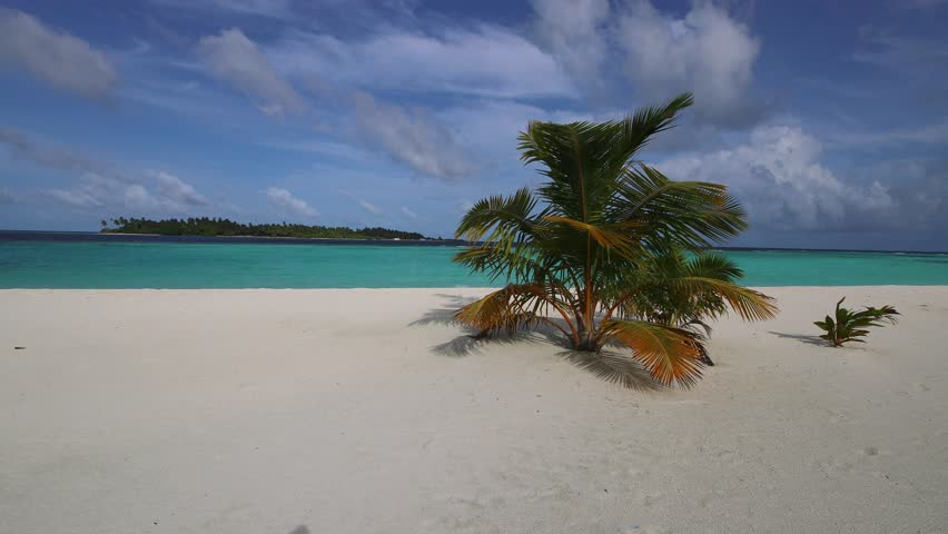 Sandy beach in the Maldives with palms and white sand. | Shutterstock HD Video #22916377