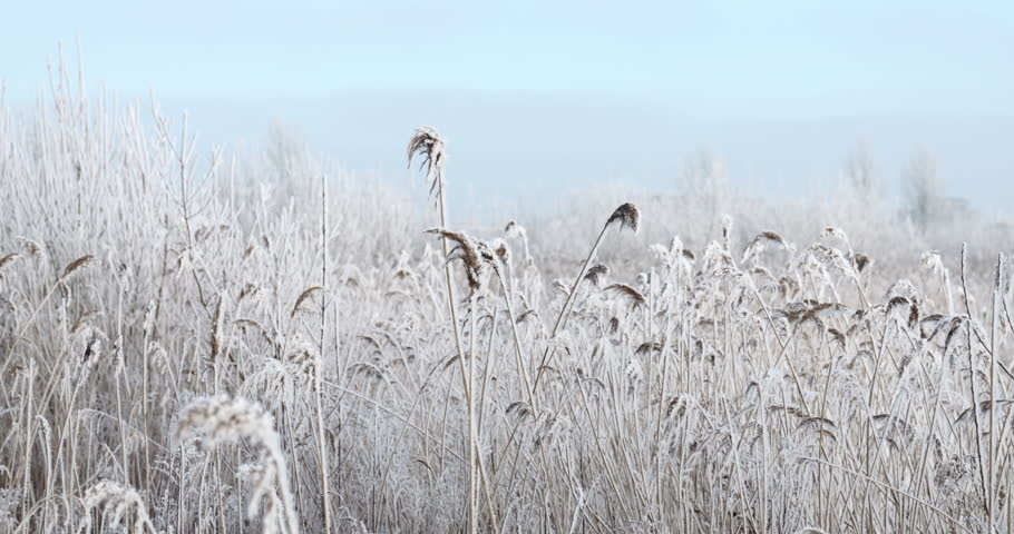 Video of ice covered reed moving slowly in the wind with background of crisp blue sky