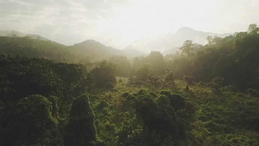 Breathtaking aerial drone shot through the rain forest #23370997