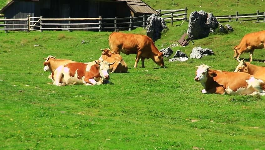 what is a split hoof animals