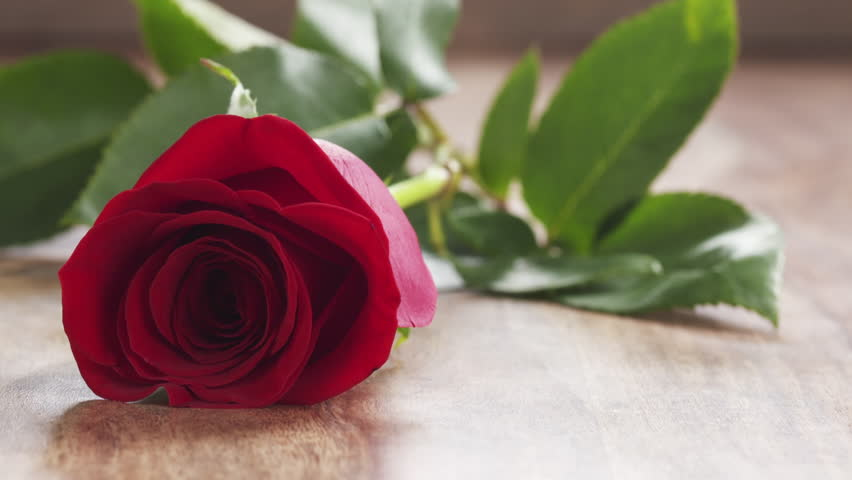 Single Red Rose Falling On Stock Footage Video 100 Royalty Free
