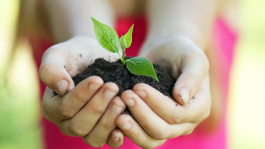 Young girl holds out handful of soil with little green plant. Concept and symbol of growth, care, sustainability, protecting the earth, ecology and green environment. Caucasian teen girl hands