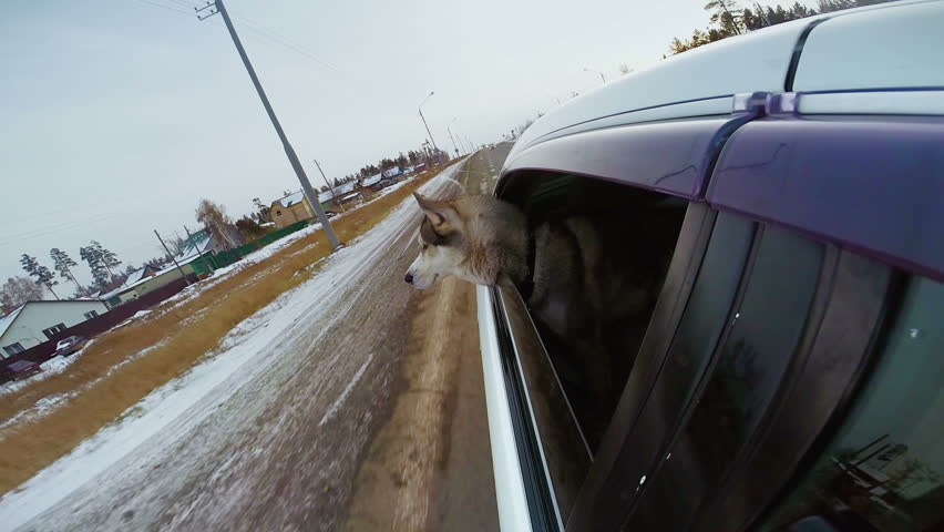 The Dog Looking At The World From A Car Window The Car Go Fast On