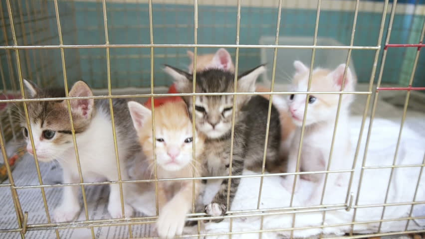 kittens in a cage episode 1
