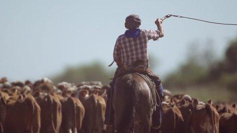 Gaucho herding