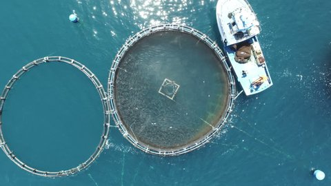Fish Factory. Top aerial drone view. Full of fishes swimming. Circle factory.