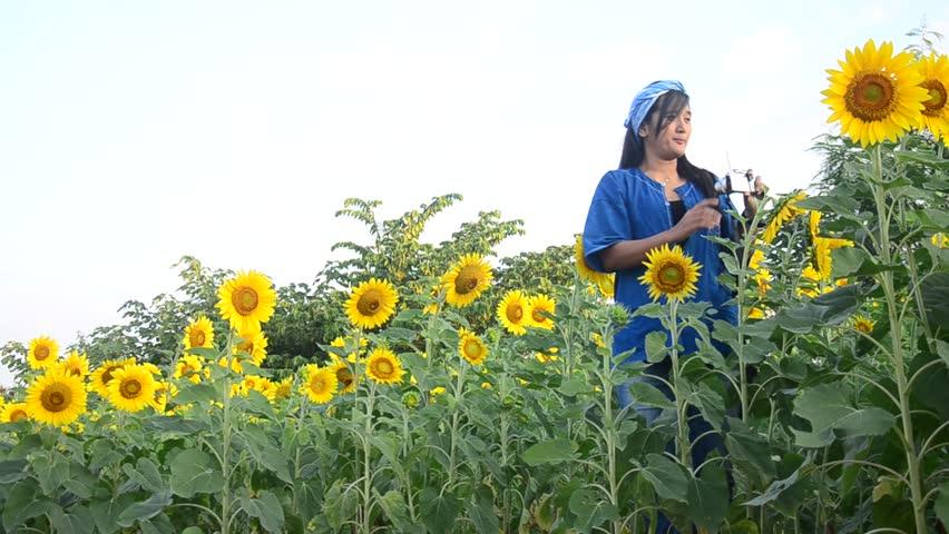 karlstad city sunflower thai