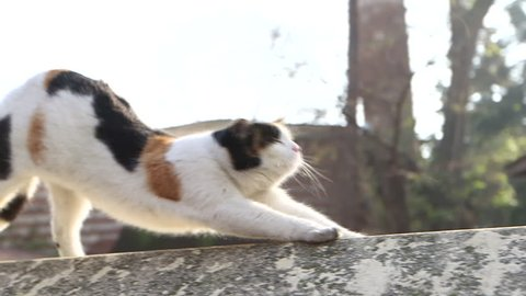 A cat stretches, walks then sits on the wall.