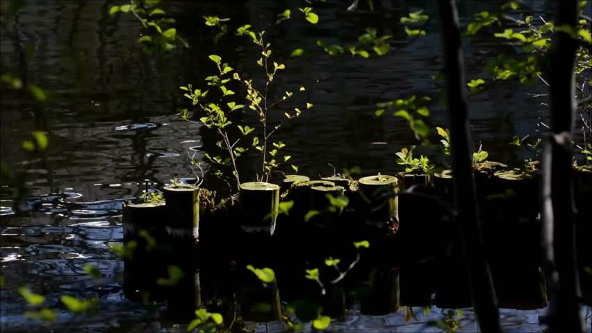 Spring in Berlin Spandau, Germany