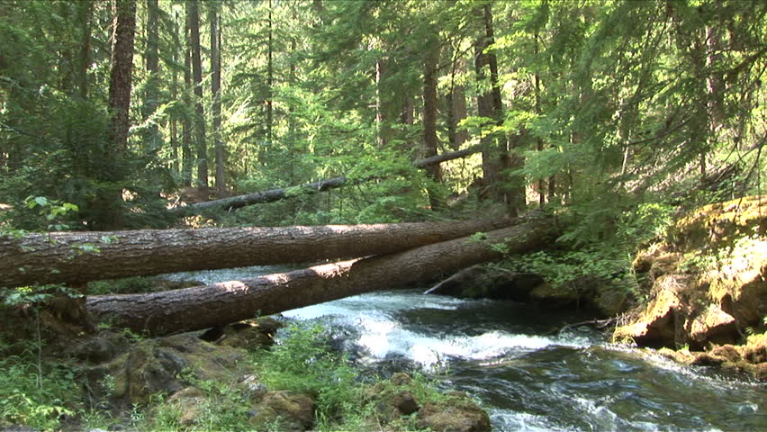 View of a quiet stream in Oregon Pacific Northwest United States