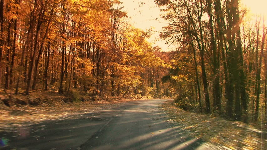 Fall in the forest. Steady footage shot from the car with grad sunset
