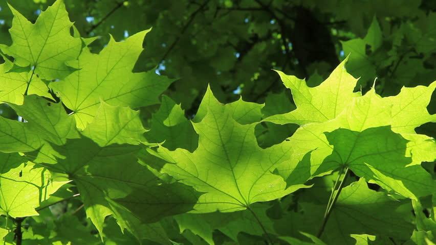 Green Leaf Dog Training