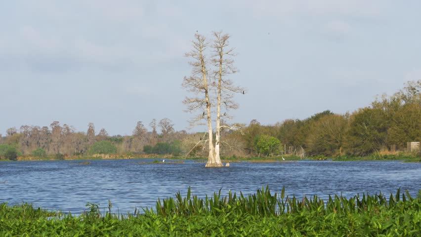 Birds Landing on Large Tree Growing in Middle of Lake, 4K