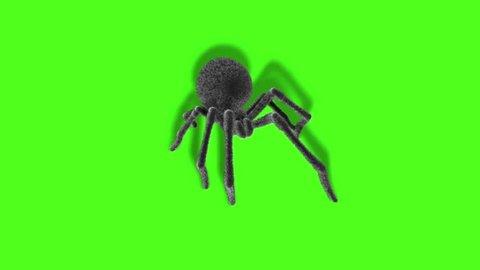 Arachnid Black Widow Spider on Wall Green Screen 3D Rendering Animation
