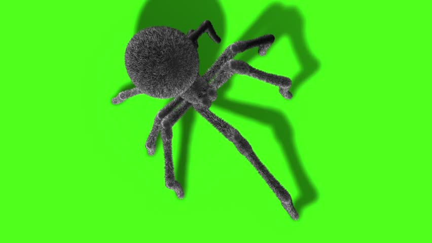 Header of Arachnid