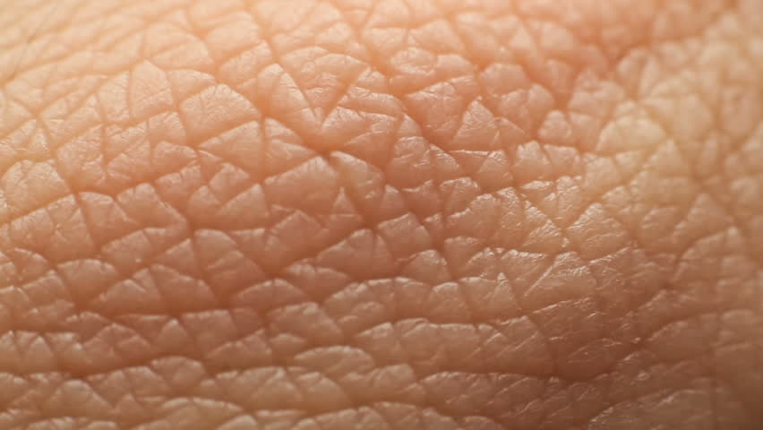 Human Skin Closeup | Shutterstock HD Video #24538757
