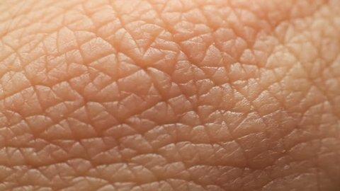 Human Skin Closeup