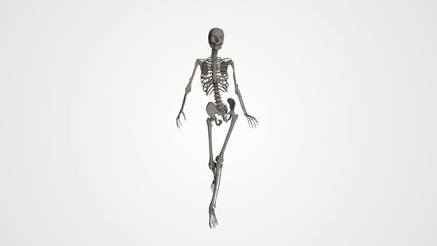 Female body organs and skeleton walk cycle with… - Royalty Free Video
