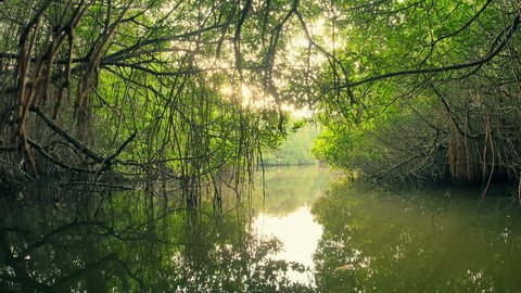 Spectacular beauty of mangrove forest nature. Traveling by boat through dense green vegetation of tropical jungle with plants and trees reflecting in water surface
