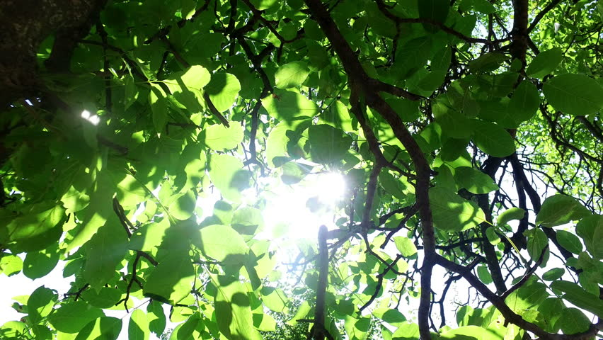 Tree at spring against the sun shining among branches