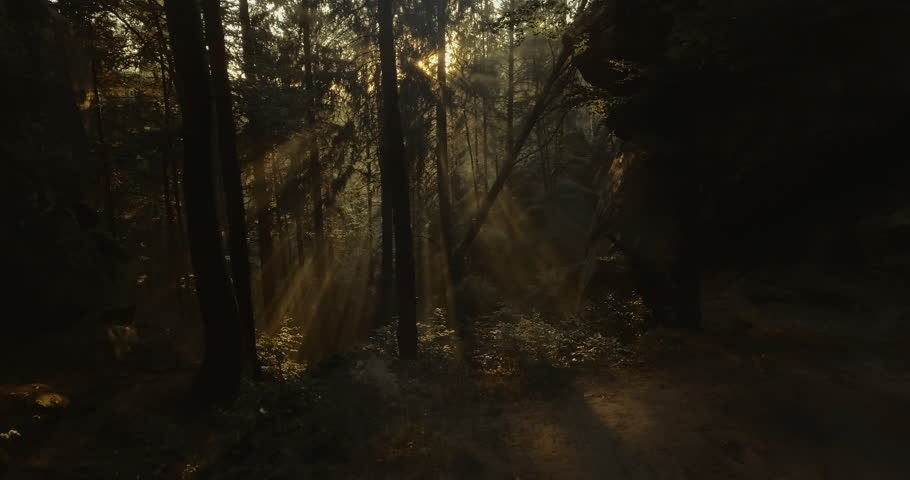 Sunset with godrays in forest | Shutterstock HD Video #24731417