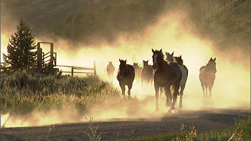 Herd of horses running along a dusty country road.