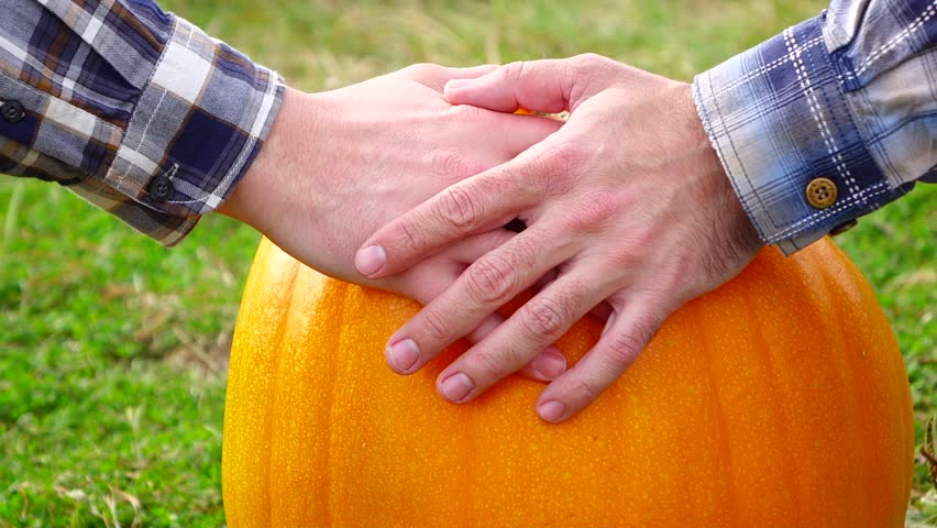 Twosome male hands, one man gently put hand on ripe pumpkin with vivid yellow skin. His friend softly touch over by palm, closeup shot of two hands on matured squash plant, countryside place mentioned | Shutterstock HD Video #25085567