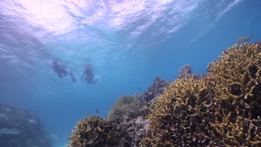 Ocean scenery swimming underwater in Australia