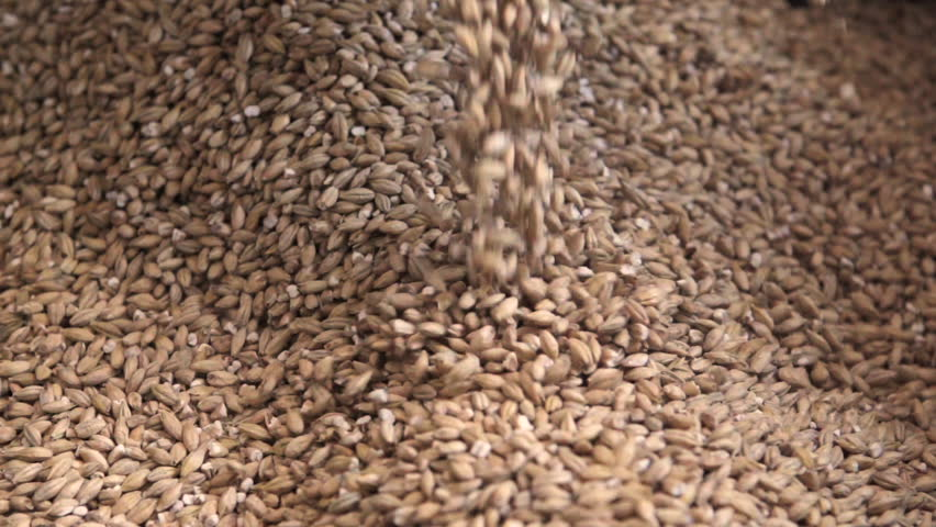 Grain is poured into a bag. Wheat is poured. Rapid video. Barley is strewing. Beer production. Farming. | Shutterstock HD Video #25154207