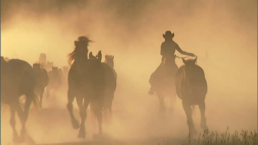 Western cowgirls drive a herd of horses along a country road