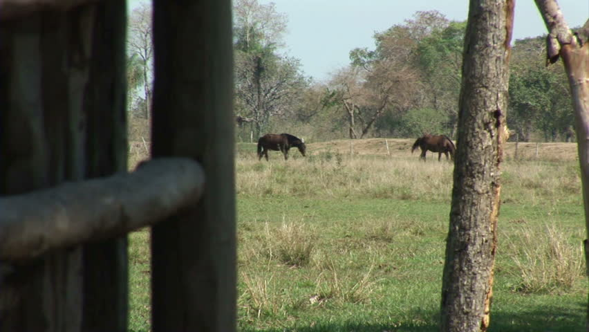 Brazil: Fauna of Amazon river region - horses in a paddock