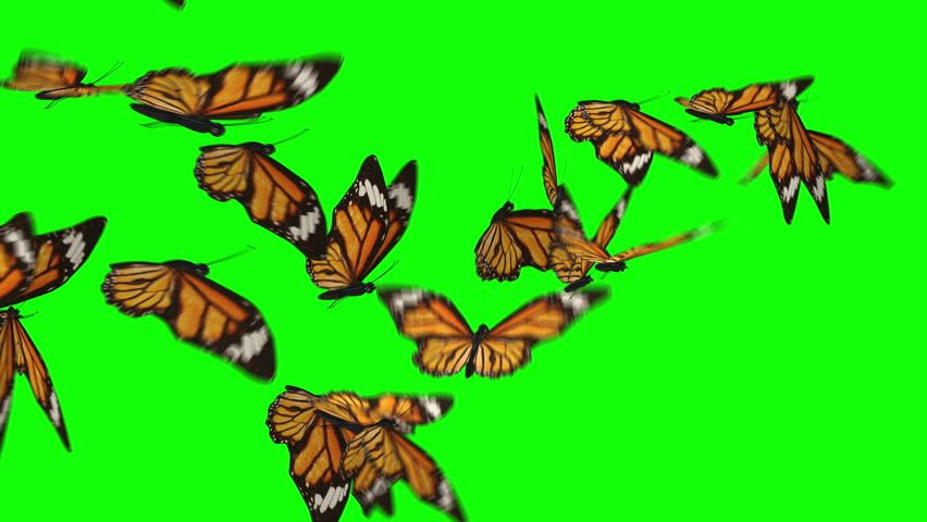 Butterflies flock flying left to right isolated on green box background. Ultra HD, Ultra-High Definition. Easter theme. Fly away. | Shutterstock Video #25357367