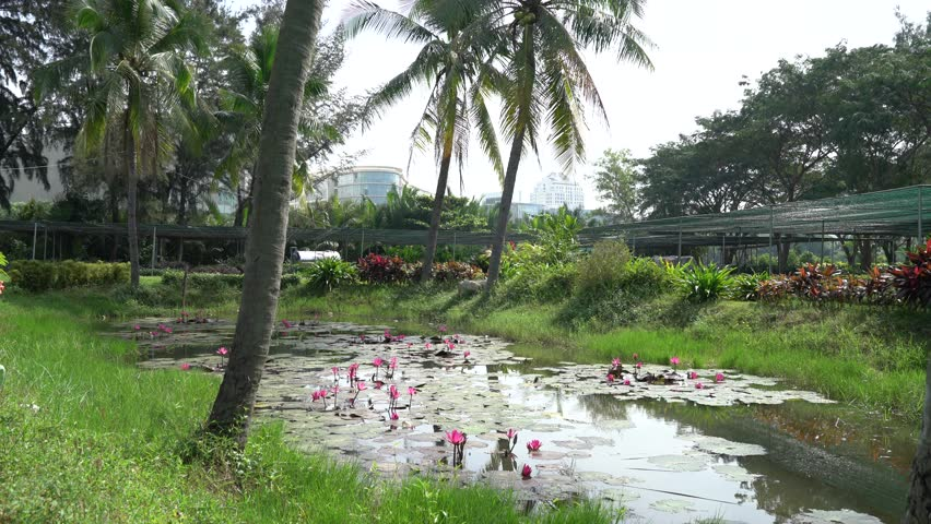 vietnam impression landscape of nature with lotus pond flower blossom in vibrant pink - Bamboo Garden 2016